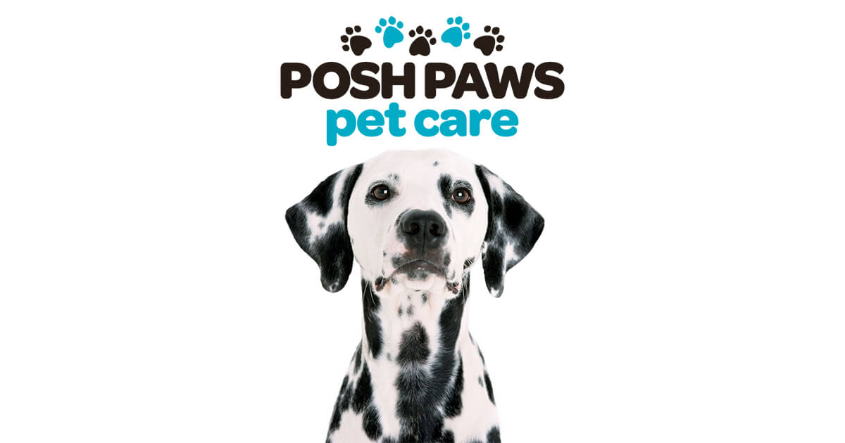 Posh Paws Dog