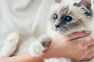 cat sitter in summerville