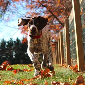 Autumn pet health