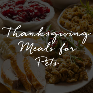 Thanksgiving Meals for Pets