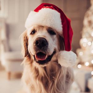 Christmas for your dog