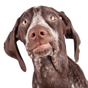 dog annoyed