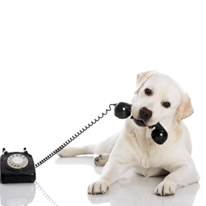dog training phone consultation