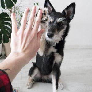 hiring a professional pet sitter
