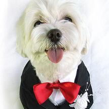pet wedding nanny